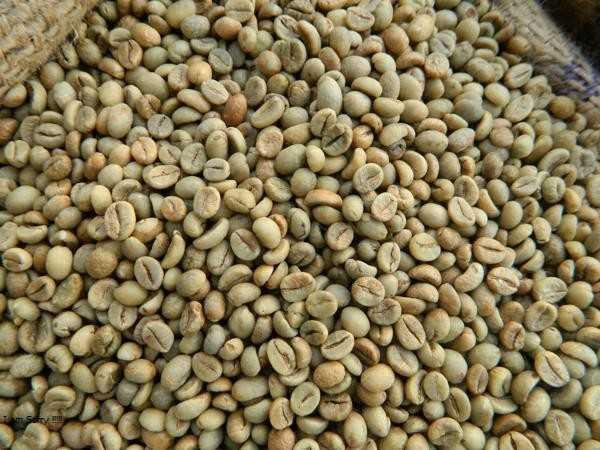 Cà phê chưa rang robusta hàng xô